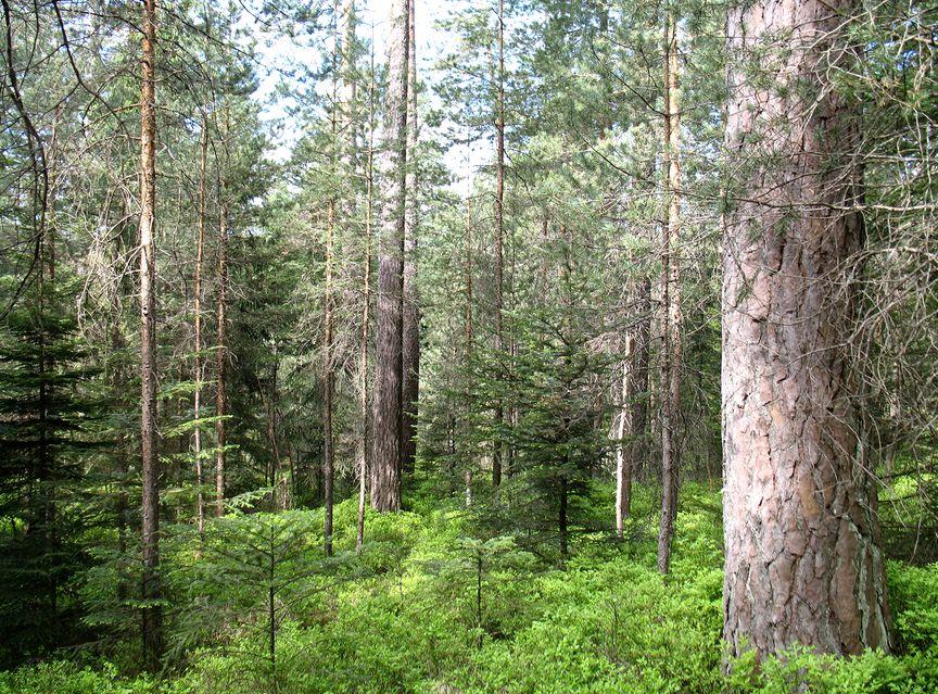 Holzplanwerk Holz Im Außenbereich: Projekte Für Garten, Terrasse ... Garten Landschaft Gestaltung Wald